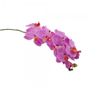 PHALENOPSIS SPRAY X 10 ARP