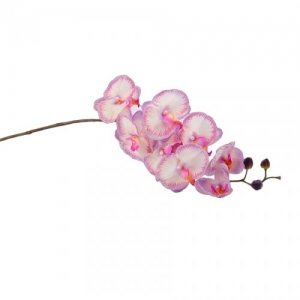 PHALENOPSIS N/TOUCH X 8 ARP
